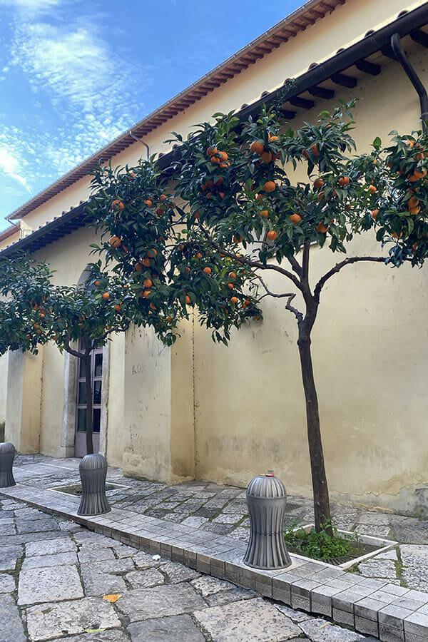 arancio di fondi
